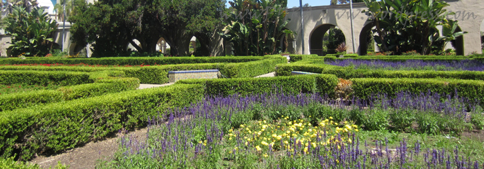 Hummingbirds flit around the Alcazar Gardens