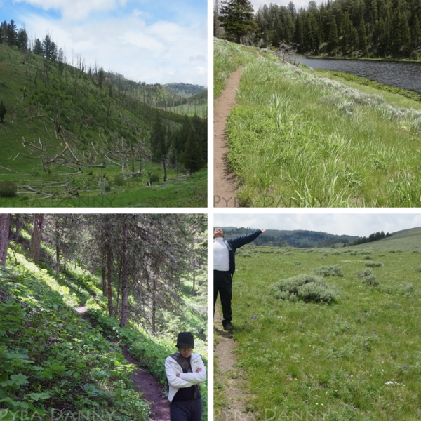 [Top left then clockwise] Burnt trees at the beginning... Passing the Lost Lake... Entering the forest and steep descent... On top of the meadowed hill.