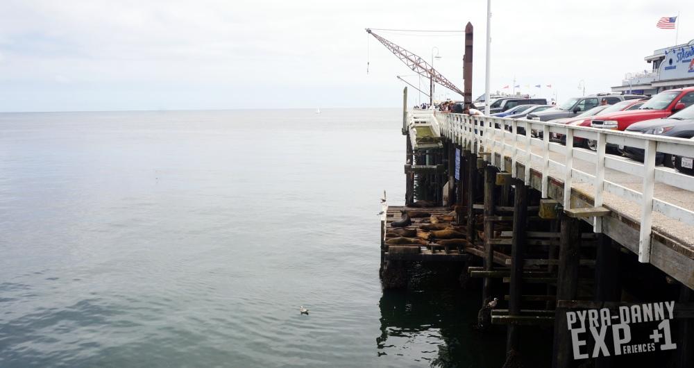 Sea lions near the boardwalk [Exploring Santa Cruz | PyraDannyExperiences.com]
