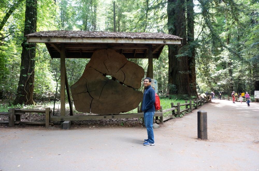 Redwood trunk [Exploring Santa Cruz | PyraDannyExperiences.com]