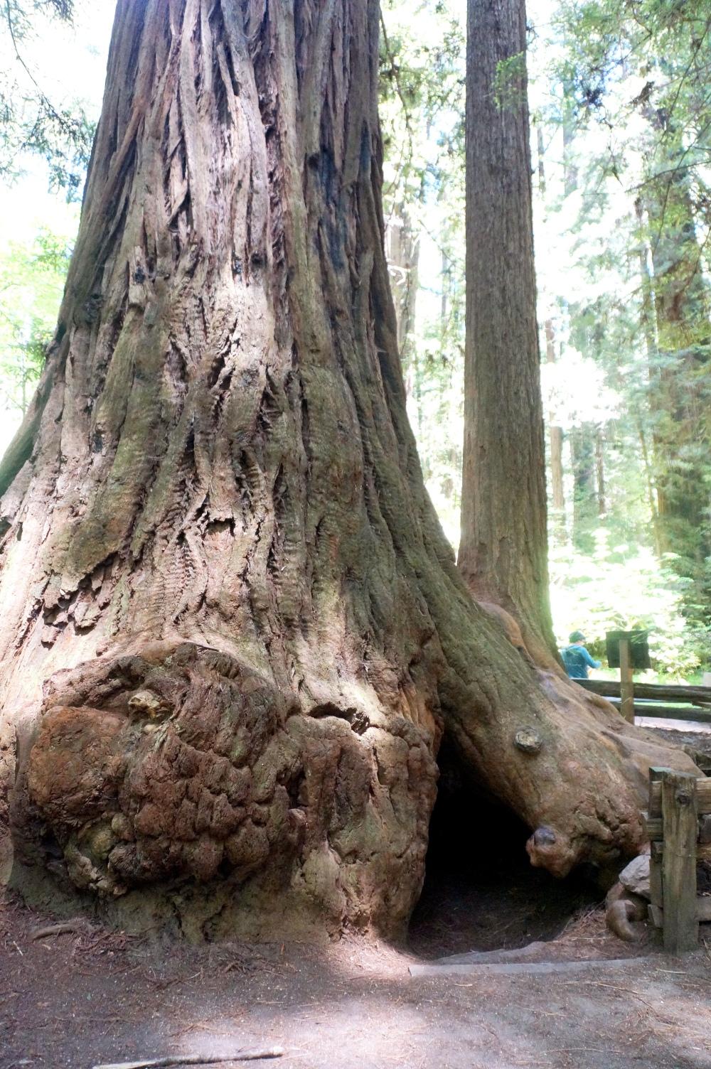 Freemont Tree Hotel [Exploring Santa Cruz | PyraDannyExperiences.com]